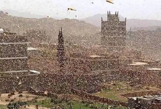 60多萬蝙蝠入侵城市遮天蔽日彷彿末日! 人類的報應來了?